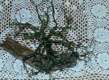 Twisted wire Tree Creations Green Nature on wood Hand made by Unchi made in US