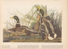 "1942 Vintage AUDUBON BIRDS #221 ""MALLARD DUCK"" LOVELY Color Art Plate Lithograph"