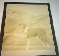 Rare Antique Victorian American Big Pet Dog! Columbus OH Animal Cabinet Photo!