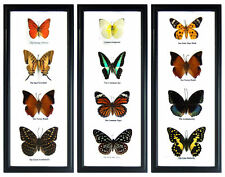 3 Framed Wall Art Display Butterfly Sets Insect Taxidermy Decor Gift FS hpgsy #2