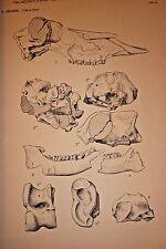Paleontology Fossil Rhinoceros Horses Deer  Rhino Mammals Natural History Skulls
