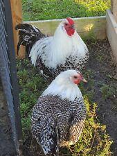 4 RARE Hatching Eggs:❤️ Deathlayer ❤️