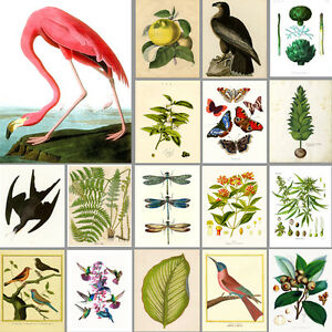 VINTAGE ART PRINTS: Birds, Botanical, Garden: Buy 3 get 4th Free