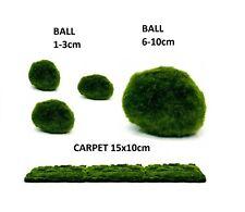 Marimo Moss Ball/Carpet Plant, 1-3cm, 6-10cm, & carpet 15x10cm Cladophlora