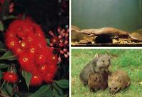 WOMBAT PLATYPUS GUM BLOSSOM POSTCARD - NEW & PERFECT