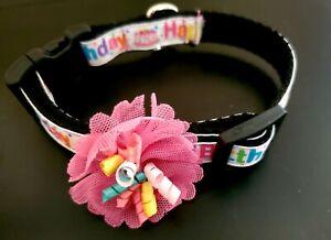 Happy Birthday Dog Collar Small