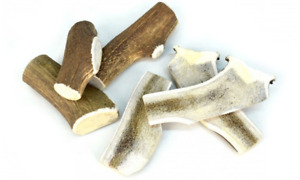 Corna di cervo snack cane  naturale al 100% XS 30/50 gr senza conservanti Leopet