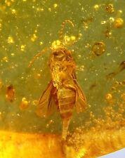 Small insect inclusion in Burmite Amber Fossil Genuine
