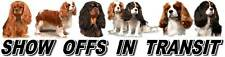 Cavalier King Charles Spaniel Show Off Dog Car Sticker By Starprint