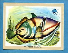 NATURAMA - Lampo 1968 - Figurina-Sticker n. 128 - PESCE BALESTRA -Rec