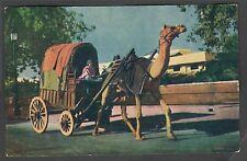 Vintage Postcard INDIA: Camel Cart - FULL COLOUR Indian Postcard PC