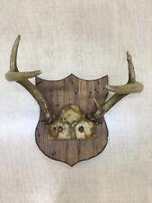 Deer Antlers 5 Point Wall Mount on Wormy Chestnut Wood