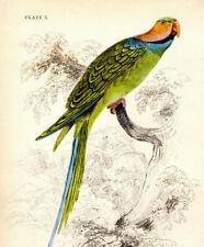 Labertier Sprechender Pirat Papagei Parry Vogel  parrot plappert Laber Neu