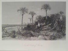 On The Coast of Florida St John's & Ocklawaha River Antique Steal Engraving 1872