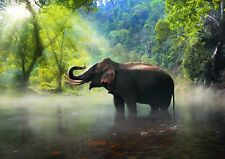 A1Elephant Poster Print 60 x 90cm 180gsm African Jungle Animal Art #16090
