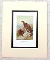 Antico Gioco Uccello Stampa Rosso Gallo Cedrone Fowl Paese Attività Circa 1929