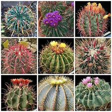 20 semi in miscuglio di Ferocactus mix ,piante grasse,seed cactus mix