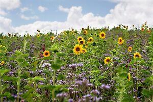 BIENENWEIDE 10 kg BUNTE Bienenwiese Saatgut Blühstreifen Saat Honigpflanzen