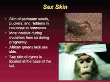 1,025 slide Ape Monkey OLD WORLD PRIMATES Biology & Disease Presentation on CD