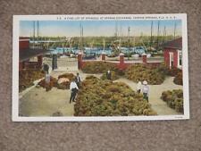 A Fine Lot of Sponges,, Tarpon Springs, Fla., unused vintage card