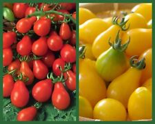 """""""Perfect Pear Tomatoes"""" 2 pk Special, Heirloom Pear Tomatoes, Red + Yellow Pear"""