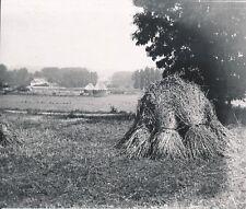 NORMANDIE c. 1900-20 - Meules de Foin Bottes de Blé Bocage Normand - NV 992