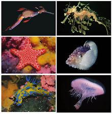 Complete set of 25 marine life postcards