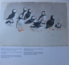 BEAUTIFUL VINTAGE BIRD PRINT ~ PUFFIN ~ TUNNICLIFFE