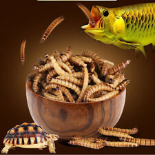 Turtle Food Bulk High-Protein Mealworms Treats for Reptile Bird Chicken Fish Koi