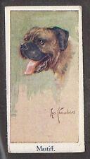 1924 Uk Leo Chambers Dog Art Moustafa Cigarette Card English Mastiff Bullmastiff