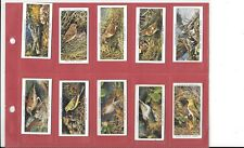 PLAYER'S - BIRDS & THEIR YOUNG  - 1937 - 10 CARDS -  HIGH NOS