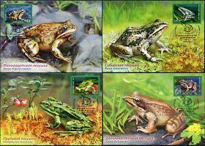Russia-2021. Fauna of Russia. Frogs. Card maximum