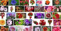 Semillas de Flores variadas para Jardin tonos rojo azul amarillo 5 gr 10.000 sem