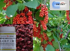 DR T&T Schizandra Berries Wu Wei Zi 100g concentrated powder (1:7)