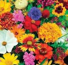 Graines de fleurs et légumes bio