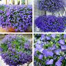 100Pc Lobelia Erinus Blumensamen nachlaufender mehrjähriger Pflanzengarten N3F5
