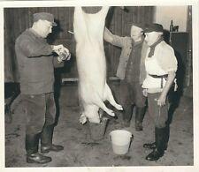 Ü136 Photo Fleischer Metzker professionnelle cochon abattus-un alcool