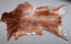 GOAT Western taxidermy Hide Rug Natural Pattern Fur Goat Hide Rode SA-5160