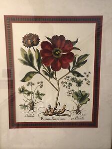 "Vintage ""Paeonia mas flore purpureo"", repro of Basilius Besler 17th c master pce"