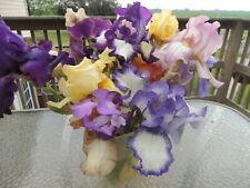 Tall Bearded Iris Assorted Colors Lot of 12 Tb Irises