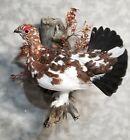 Alaskan late fall willow ptarmigan grouse pheasant taxidermy bird art