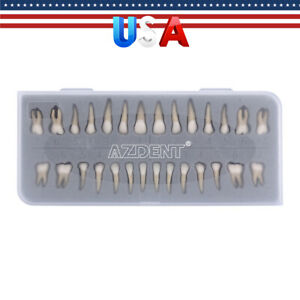 28Pcs/Kit Dental 1:1 Permanent Teeth Demonstration Teach Study Tooth Model 7008#