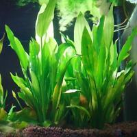 Künstliche Plastikwasser Gras Grün Pflanzen Verzierung Für Aquarium Zierde Deko!