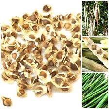 100 dried moringa oleifera seeds natural thai herbal herb dietary supplement