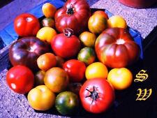 14 alte Sorten Tomaten je 5 Samen aus Ernte 2018 auch Wildtomaten 70 seeds RAR