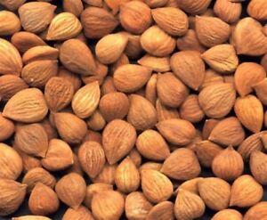 Bittere Aprikosenkerne - neue Ernte - Vitamin B 17 Nicht behandelt einheimisch!