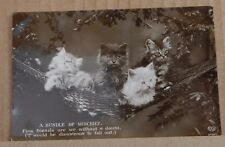 "Postcard Kittens "" A Bundle Of Mischief "" Real Photo   Unposted"