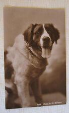 Dog Chien Old Postcard ~ Chien Du St.Bernard