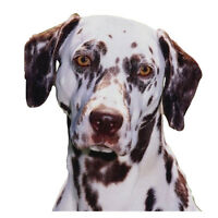 NEU Dalmatiner Hundehalsband - Große Größe - 40cm bis 50cm / 39.9to50cm