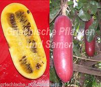 🔥 🍉 Cassabanana  Sicana odorifera 5 Samen MEHRJÄHRIG Gurke Frucht Melone